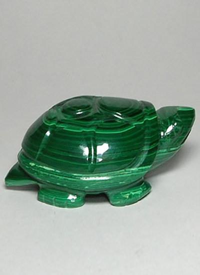 Malachite Tortoise Image
